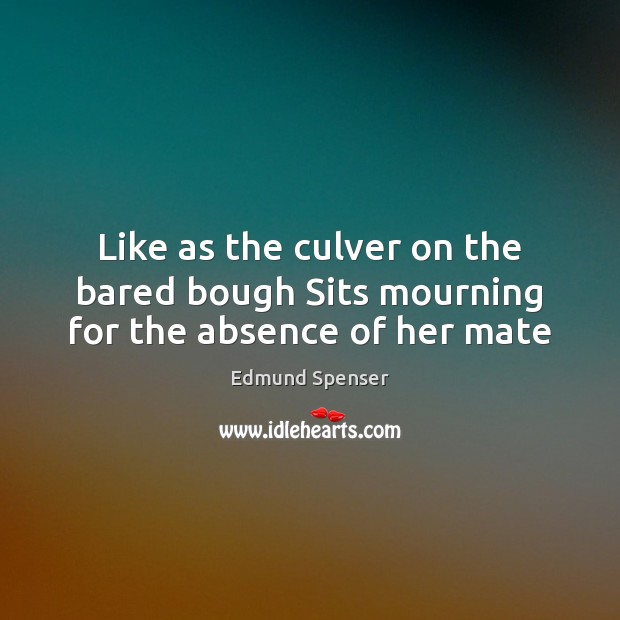 Like as the culver on the bared bough Sits mourning for the absence of her mate Edmund Spenser Picture Quote
