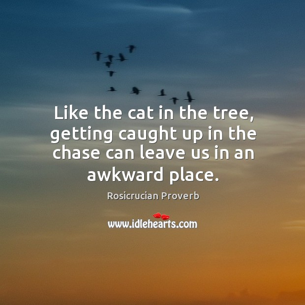 Image, Like the cat in the tree, getting caught up in the chase can leave us in an awkward place.