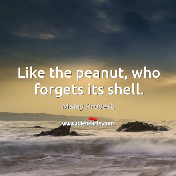 Like the peanut, who forgets its shell. Malay Proverbs Image