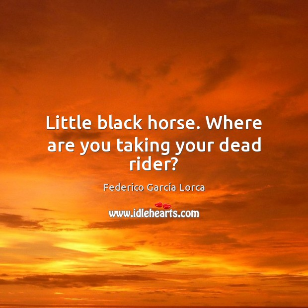 Little black horse. Where are you taking your dead rider? Image