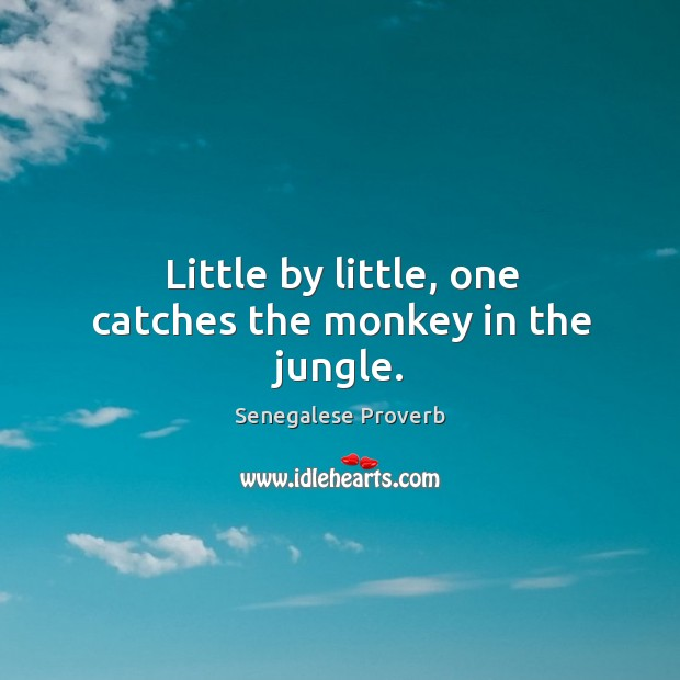 Little by little, one catches the monkey in the jungle. Senegalese Proverbs Image