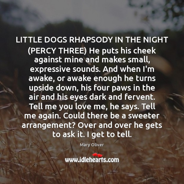 Image, LITTLE DOGS RHAPSODY IN THE NIGHT (PERCY THREE) He puts his cheek