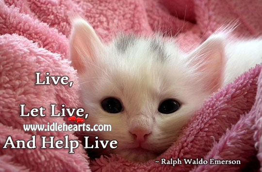 Image, Live, let live, and help live