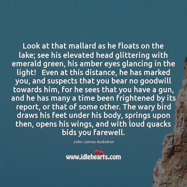 Image, Look at that mallard as he floats on the lake; see his