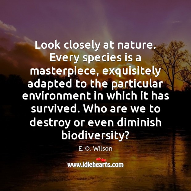 Look closely at nature. Every species is a masterpiece, exquisitely adapted to E. O. Wilson Picture Quote