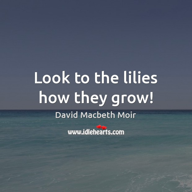Look to the lilies how they grow! Image