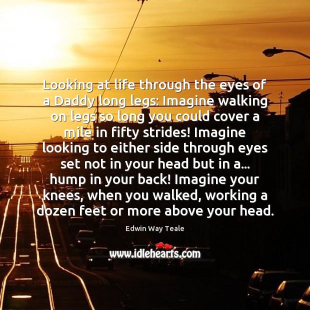 Looking at life through the eyes of a Daddy long legs: Imagine Edwin Way Teale Picture Quote