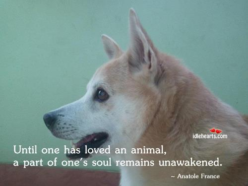 he who has never loved an animal a part of his soul remains unawakened