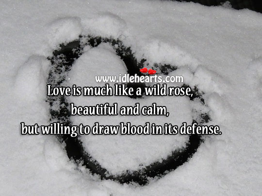 Love Is Much Like A Wild Rose