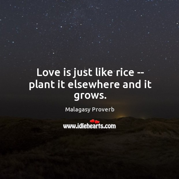 Love is just like rice — plant it elsewhere and it grows. Malagasy Proverbs Image