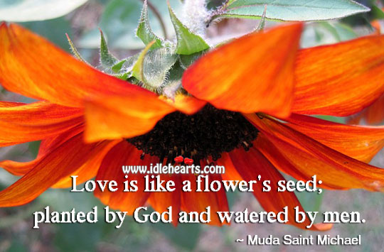 Love is like a flower's seed Flowers Quotes Image
