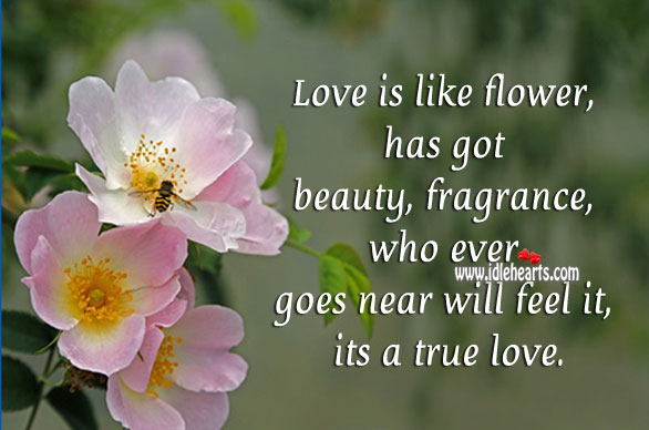 Love is like flower, it has got beauty Flowers Quotes Image