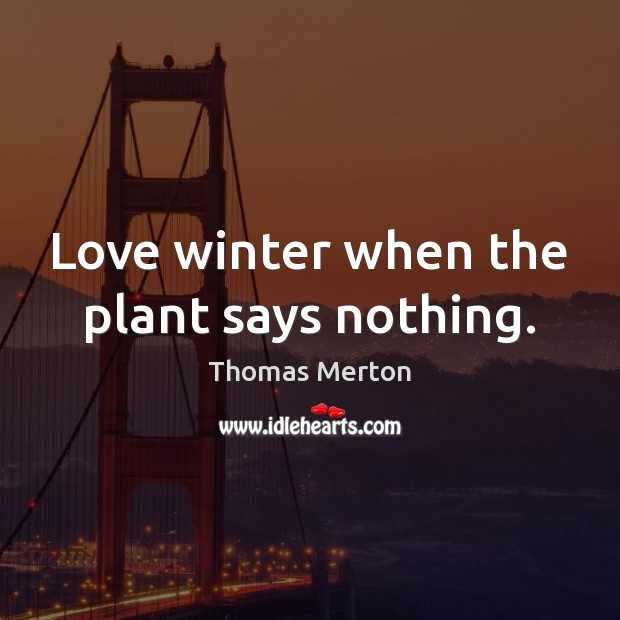 Image, Love winter when the plant says nothing.