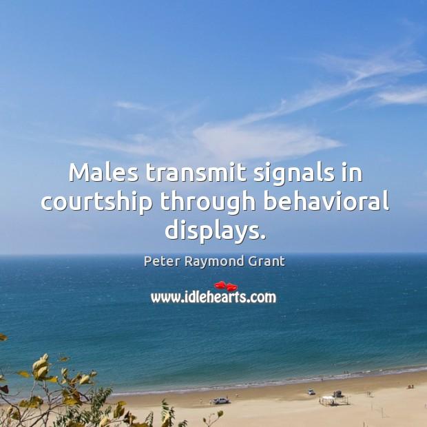 Males transmit signals in courtship through behavioral displays. Image