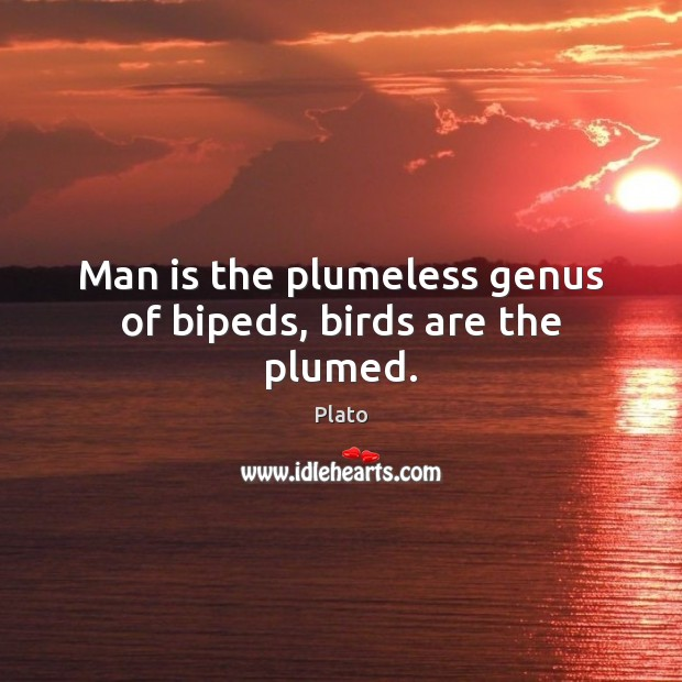 Man is the plumeless genus of bipeds, birds are the plumed. Image