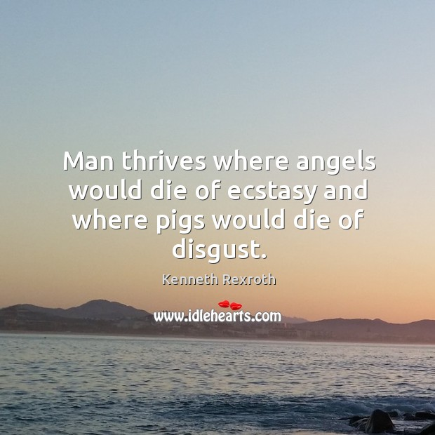 Man thrives where angels would die of ecstasy and where pigs would die of disgust. Kenneth Rexroth Picture Quote