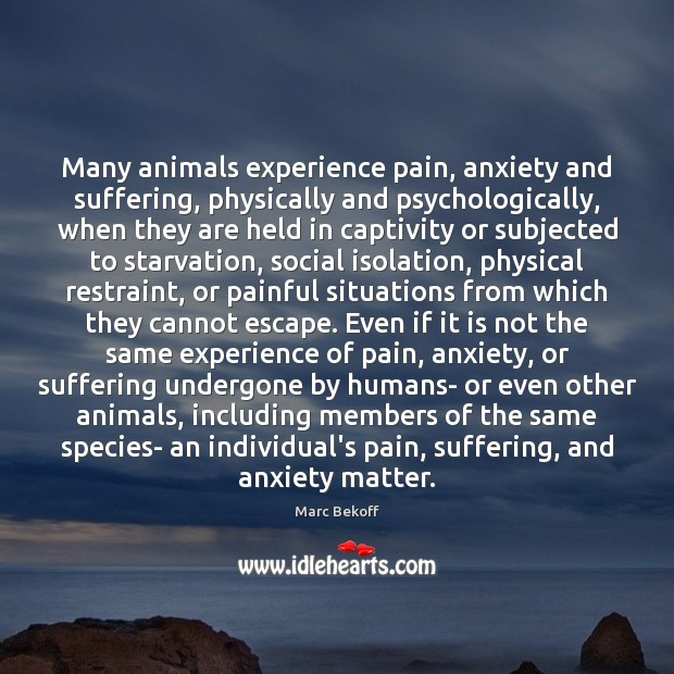 Image, Many animals experience pain, anxiety and suffering, physically and psychologically, when they