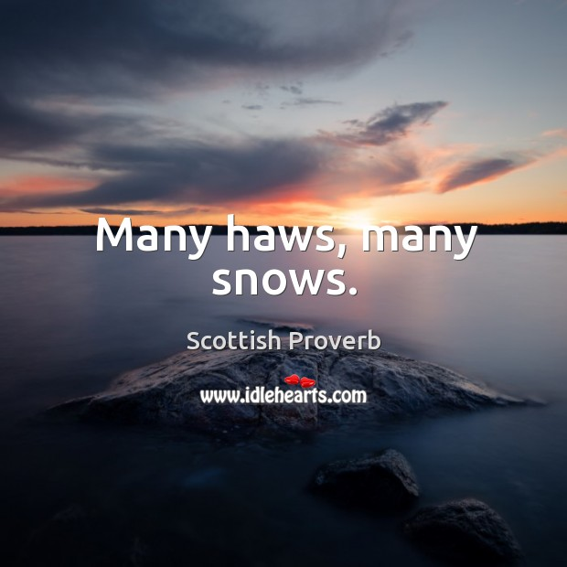Many haws, many snows. Image