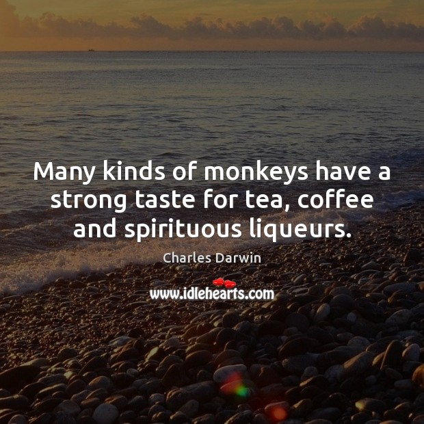 Many kinds of monkeys have a strong taste for tea, coffee and spirituous liqueurs. Image