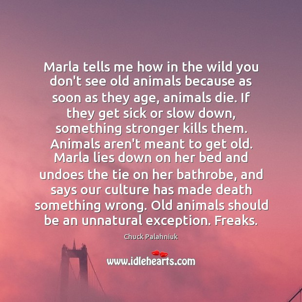 Marla tells me how in the wild you don't see old animals Chuck Palahniuk Picture Quote
