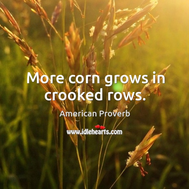Image, More corn grows in crooked rows.