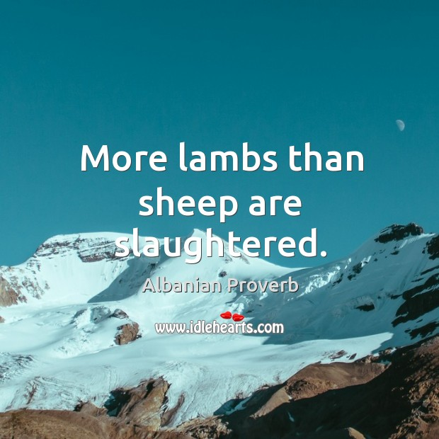 More lambs than sheep are slaughtered. Albanian Proverbs Image