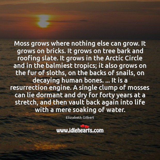 Moss grows where nothing else can grow. It grows on bricks. It Elizabeth Gilbert Picture Quote