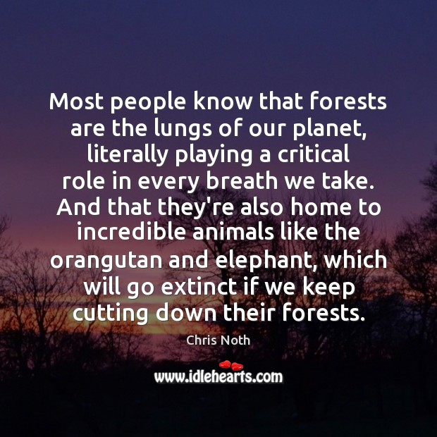 Most people know that forests are the lungs of our planet, literally Image