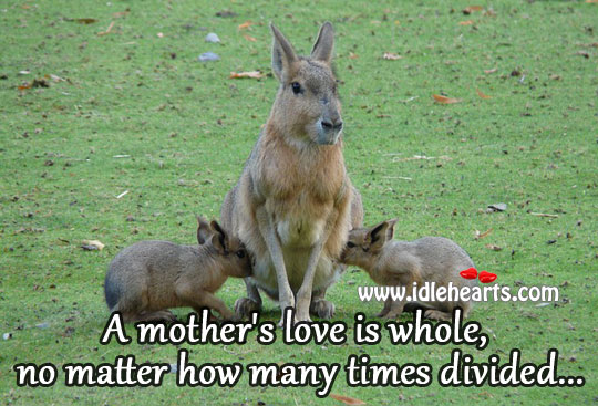 A Mother's Love Is Whole, No Matter