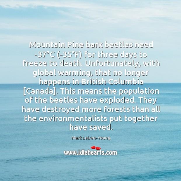Mountain Pine bark beetles need -37°C (-35°F) for three days Image