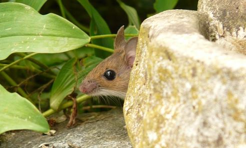 Image, A mouse and mousetrap
