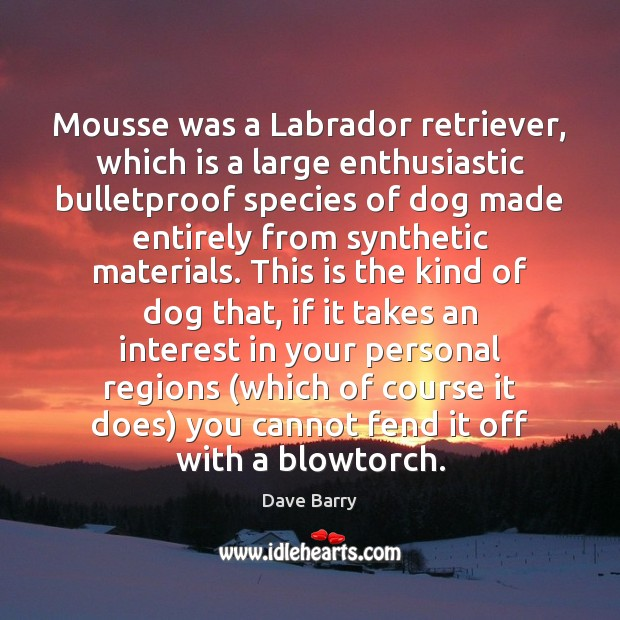 Image, Mousse was a Labrador retriever, which is a large enthusiastic bulletproof species