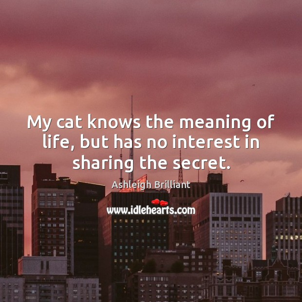 My cat knows the meaning of life, but has no interest in sharing the secret. Ashleigh Brilliant Picture Quote