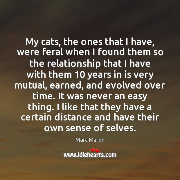 My cats, the ones that I have, were feral when I found Marc Maron Picture Quote