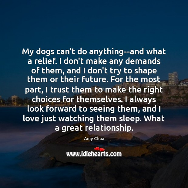 My dogs can't do anything–and what a relief. I don't make any Amy Chua Picture Quote
