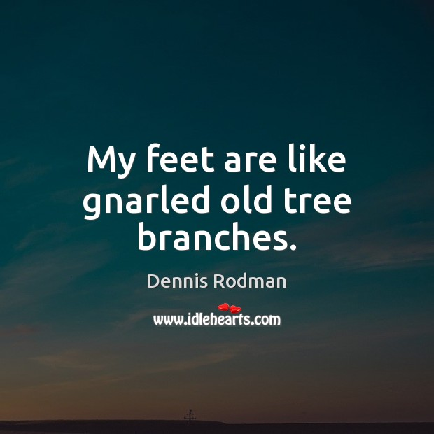 My feet are like gnarled old tree branches. Dennis Rodman Picture Quote