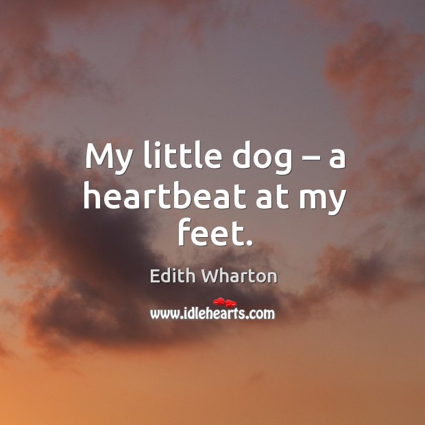 My little dog – a heartbeat at my feet. Image