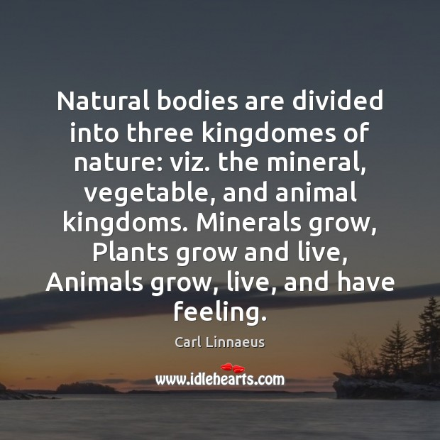 Image, Natural bodies are divided into three kingdomes of nature: viz. the mineral,