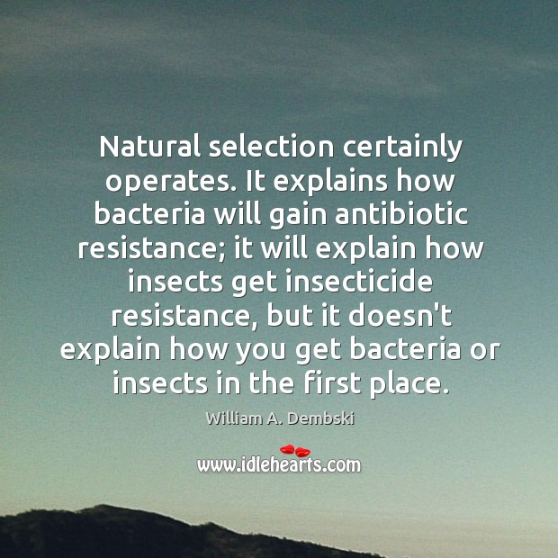 Natural selection certainly operates. It explains how bacteria will gain antibiotic resistance; William A. Dembski Picture Quote