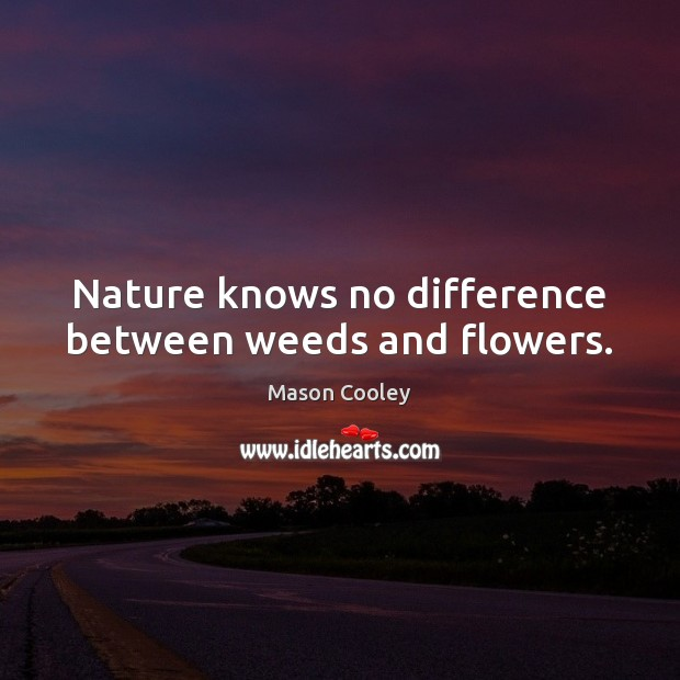 Nature knows no difference between weeds and flowers. Image