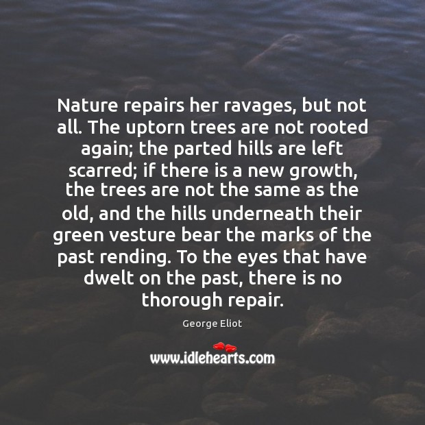 Nature repairs her ravages, but not all. The uptorn trees are not Image
