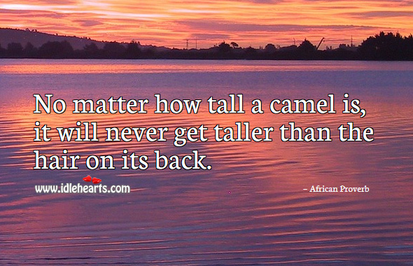 No matter how tall a camel is, it will never get taller than than the hair on its back. African Proverbs Image