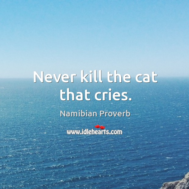 Never kill the cat that cries. Namibian Proverbs Image