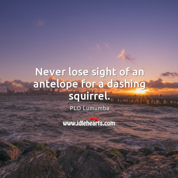Image, Never lose sight of an antelope for a dashing squirrel.