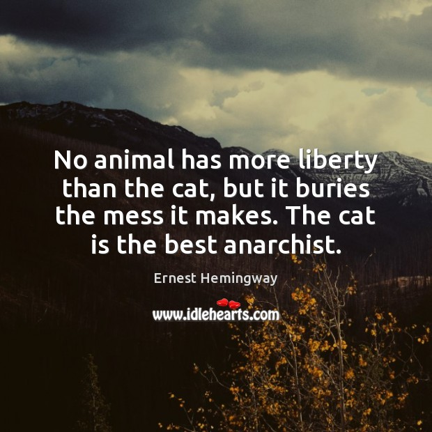 No animal has more liberty than the cat, but it buries the Ernest Hemingway Picture Quote
