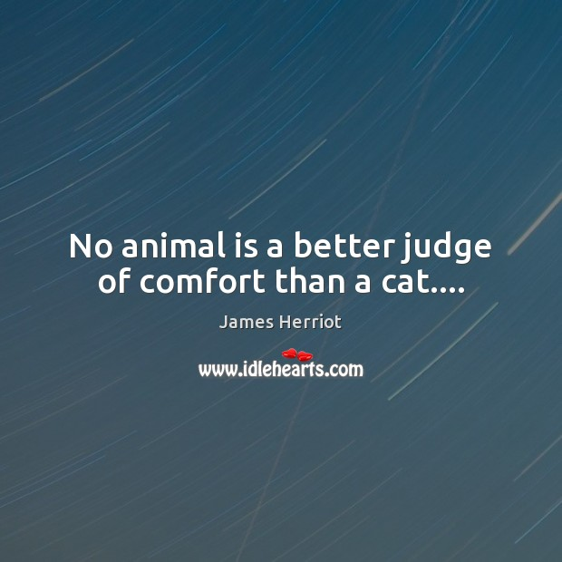 No animal is a better judge of comfort than a cat…. Image