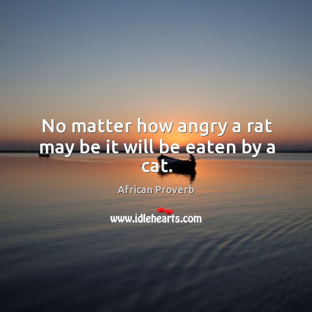 Image, No matter how angry a rat may be it will be eaten by a cat.