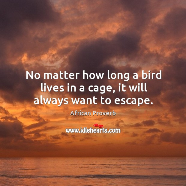 Image, No matter how long a bird lives in a cage, it will always want to escape.