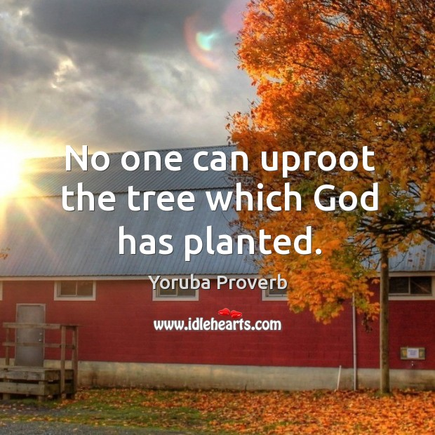 No one can uproot the tree which God has planted. Yoruba Proverbs Image