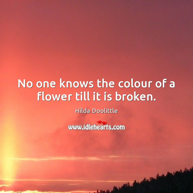 No one knows the colour of a flower till it is broken. Hilda Doolittle Picture Quote
